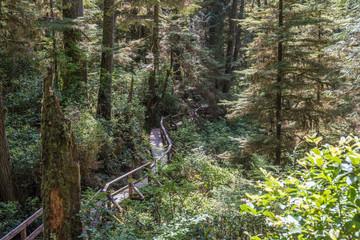 Kanada - Wanderweg Tofino Picific-Rim-Nationalpark und Rainforrest Trail
