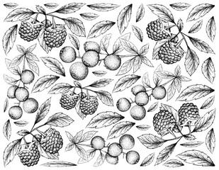 Hand Drawn Background of Ripe Bilberries and Blue Raspberries