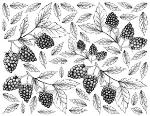 Hand Drawn Background of Fresh Blackberry Fruits