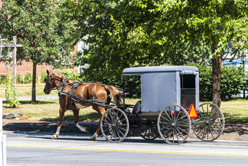 Amish Horse and Buggy on a Sunny Summer Day