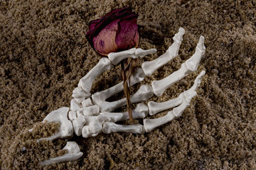 Skeleton hand with a dry rose
