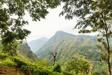 Ella tea plantations views