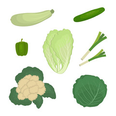 Set of green vegetables, isolated on a white background. There is a zucchini, cucumber, onion, pepper, cabbage, cauliflower, chinese cabbage in the picture. Food icons. Vector illustration.