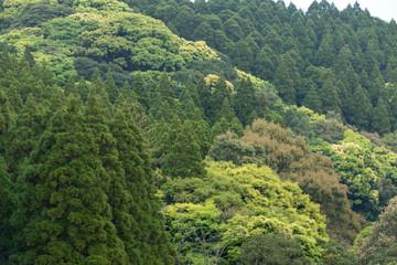 山は初夏の新緑