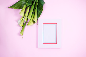 Pink modern blank frame top view calla flowers