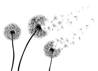Abstract Dandelions dandelion with flying seeds – stock vector