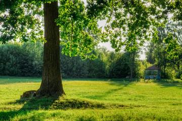Oak tree under a bright sun in a field