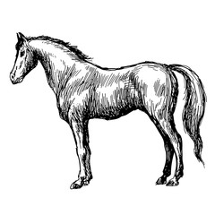 freehand sketch illustration of horse