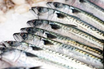 Mackerels fish in close up view