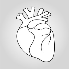 Human heart icon isolated illustration
