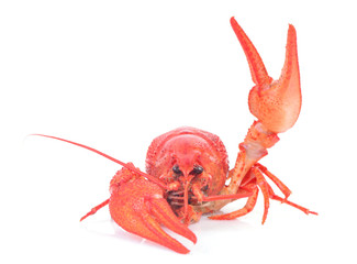 Cooked crawfish on a white background