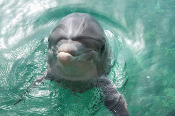 Close up portrait of dolphin smiling and looking to the camera.