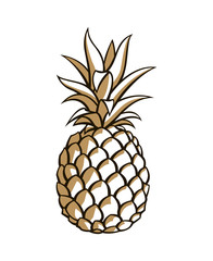 illustration of pineapple tropical fruit