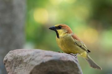 Macro bird on a rock