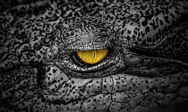 The terrifying eye of crocodile a large aquatic predatory reptiles like aligator