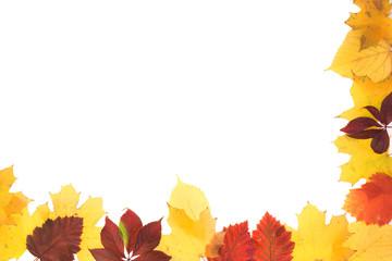 Frame of autumn leaves.