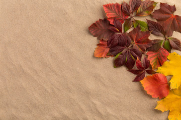 Sand background with autumn leaves.