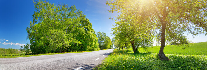 Wall Mural - asphalt road panorama in countryside on sunny spring evening. Alley in summer