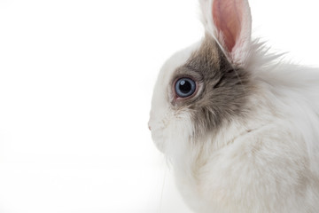 rabbit on white background