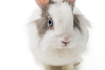 rabbit on white background, close up.