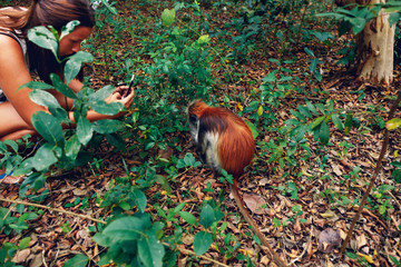 Woman tourist takes a picture of monkey red colobus in natural environment