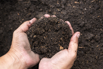 Soil in male hands's farmer for agriculture, gardening or ecology concept with copy space for text.