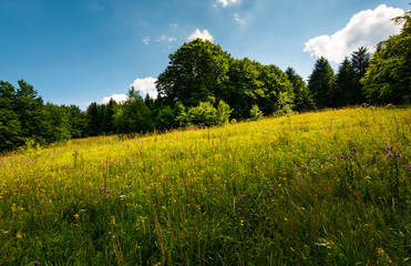 spot of light on a meadow among forest. gorgeous nature scenery in summer. picturesque view.