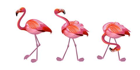 Pink flamingo bird. Set. Vector illustration.