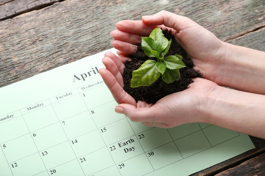 Female hands holding young plant with april calendar on wooden table