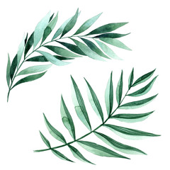 Watercolor illustration of fern leaves