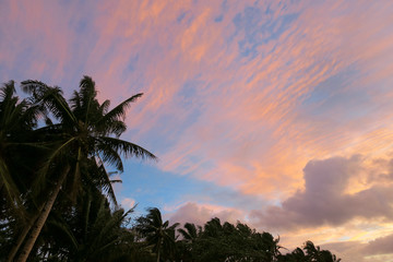 Pink tropical sunset sky with palm trees