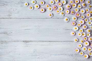 Wooden light spring-summer background with daisies
