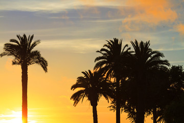 palm trees in the sunset on the shore of the ocean