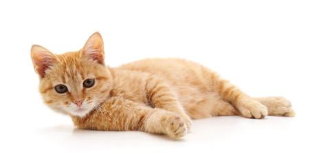 One brown kitten.