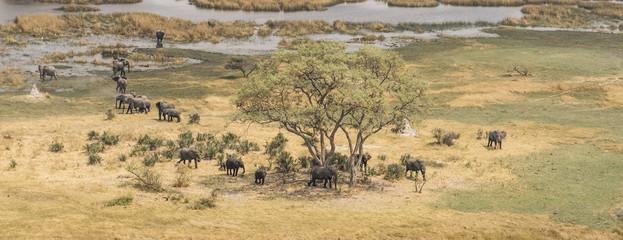 Herd of elephants in the Okavango Delta (aerial view)