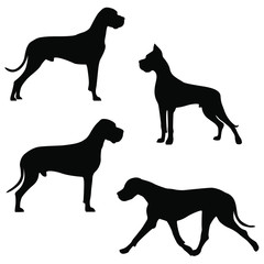 Set of icons of great dane. Vector image of dog silhouettes in different poses on white background for your design.