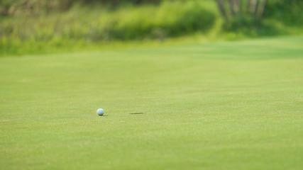 Scenery green golf in morning
