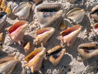 background, seashells on sand