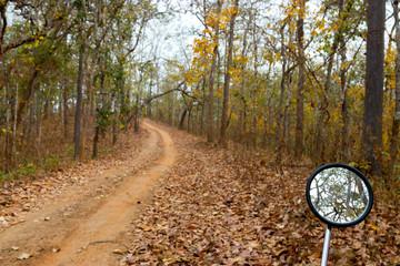 Summer rural forest road landscape