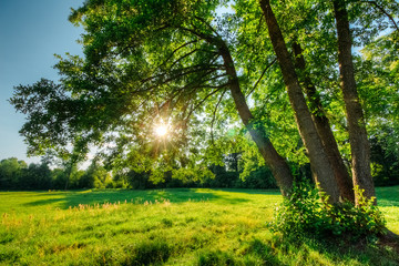 Beautiful summer landscape with oak and sun