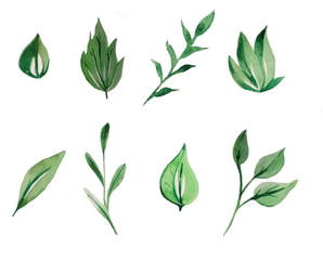 watercolor green leaves