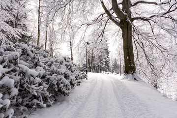 Photo of snowy landscape covered with snow and road in winter