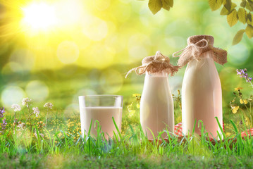 Organic milk on grass in a sunny meadow with flowers