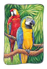 Hand-drawn illustration of macaw parrots in the frame