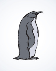 Penguin. Vector drawing