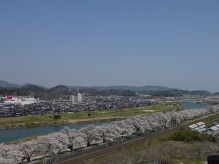 白石川。一目千本桜。大河原 柴田 宮城 日本。4月中旬。