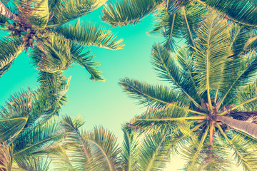 Blue sky and palm trees view from below, vintage style, tropical beach and summer background, travel concept Fotomurales