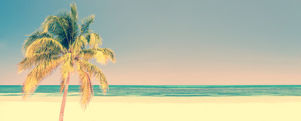 Wall Mural - Palm tree on a beach in Cayo Levisa Cuba, panoramic background with copy space, vintage style, travel concept