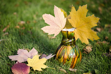 Maple leaves in a vase on green grass