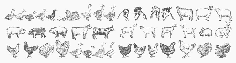 Farm animals collection. Hand drawn big farm animals set vector Wall mural